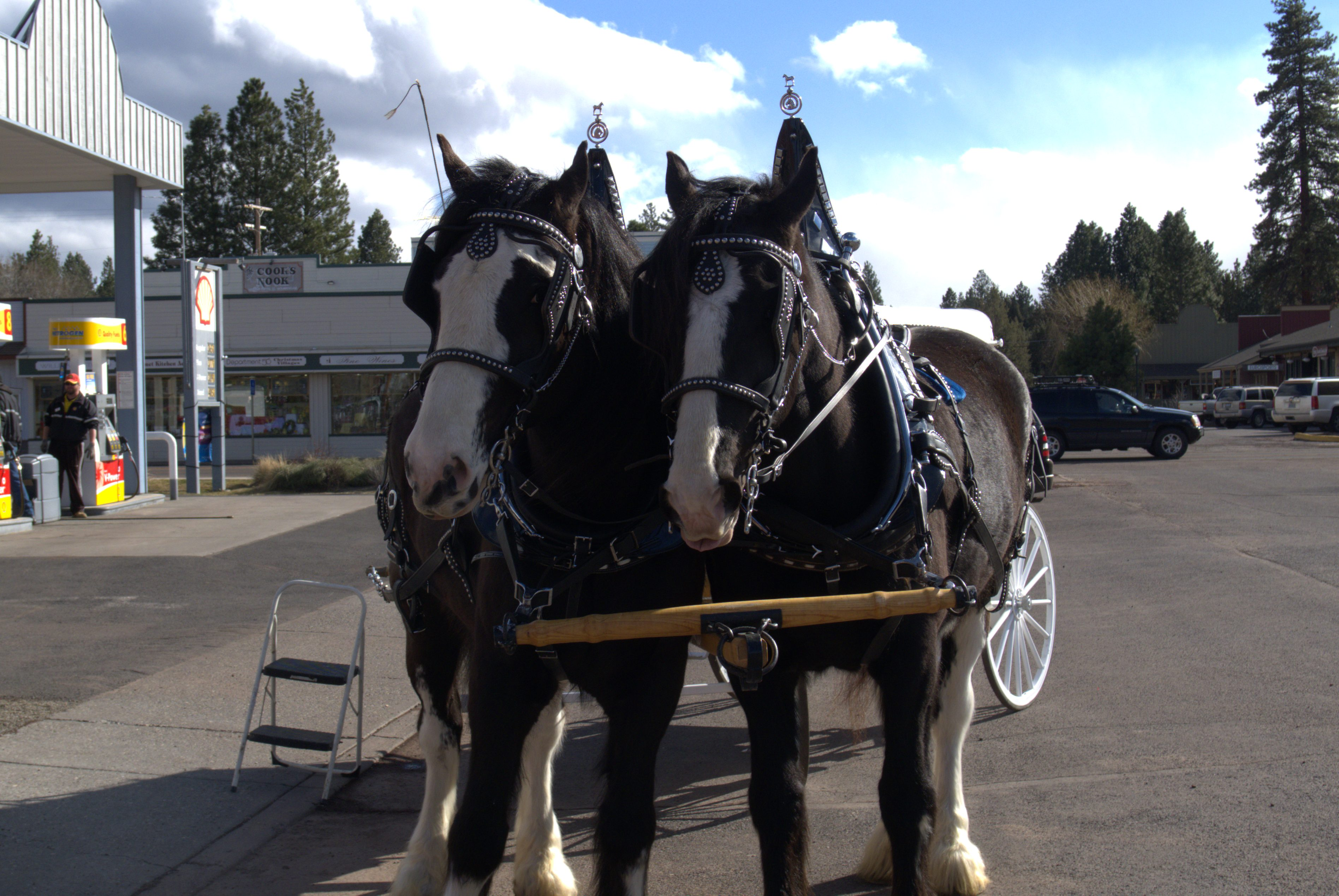 Lone Pine Clydesdale (Oregon, USA)